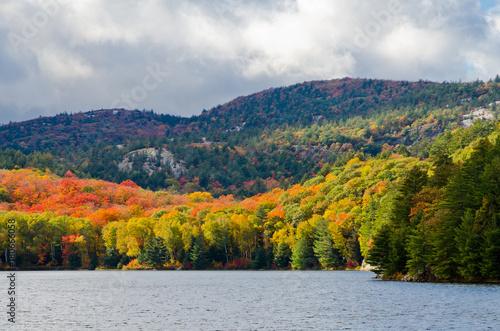 Keuken foto achterwand Canada Forest lake