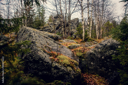 Fotobehang Betoverde Bos Dark gloomy mystic forest in the mountains with huge rocks in the foreground. Stones, roots of the trees and land are covered with moss.