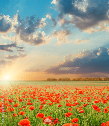 Foto op Canvas Klaprozen sunset in clouds over field with poppies