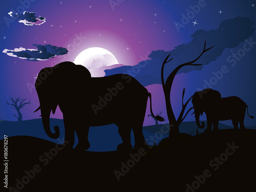 Fotobehang Zwart African Night with Elephant