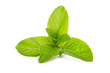 green mint  isolated on white background