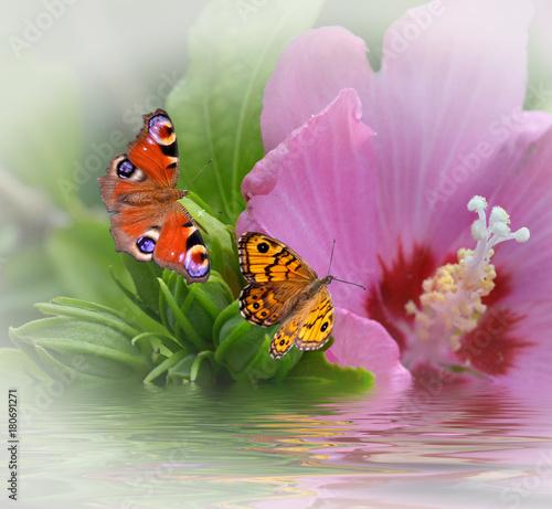 Fotobehang Vlinder träumen