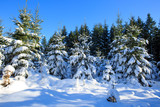 Winter landscape with snow covered trees. - 180706468