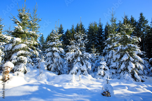 Winter landscape with snow covered trees.