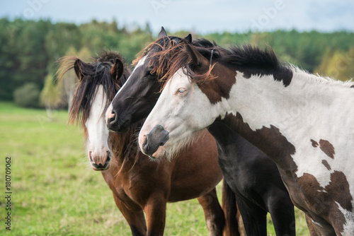 Three horses on the field in summer