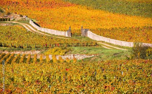Fotobehang Wijngaard Vineyards in the autumn season, Burgundy, France