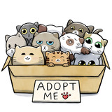 Box full of cats for adoption