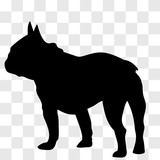 Silhouette of a male French bulldog seen from the left side in black on a transparent background. - 180735232