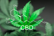 Quadro A beautiful sheet of cannabis marijuana in the defocus with the image of the formula CBD
