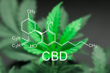A beautiful sheet of cannabis marijuana in the defocus with the image of the formula CBD - 180742027
