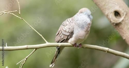 Poster Grey bird on tree branch