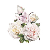 Bouquet of roses, watercolor, can be used as greeting card, invitation card for wedding, birthday and other holiday and  summer background. - 180765221