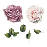 Roses and leaves, watercolor, can be used as greeting card, invitation card for wedding, birthday and other holiday and  summer background - 180765640