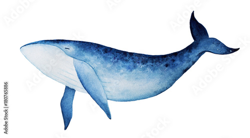 Blue whale watercolor illustration. Spirit animal, totem, wisdom holder, history keeper, peaceful strength, inner truth, creativity, emotional rebirth. Hand drawn painting, isolated, white background. - 180765886