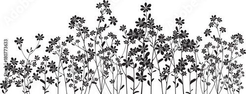 Silhouette wildflowers on white - 180773633