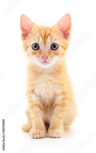 Fotobehang Kat Kitten on white background.