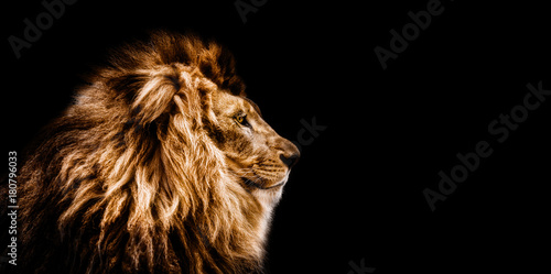 Fotobehang Leeuw Portrait of a Beautiful lion, Cat in profile, lion in dark
