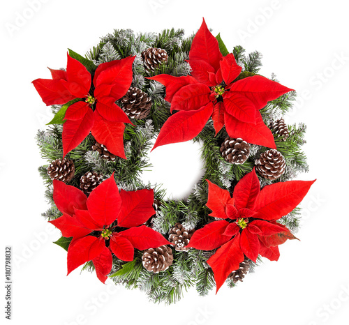 Christmas wreath red poinsettia flowers isolated white background
