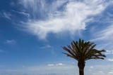 Arbol y hojas de palmera aislada - 180836615