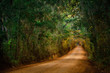 Oak Canopy Road in Florida