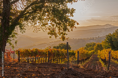 Papiers peints Toscane Magnificent view of picturesque autumn vineyards in the Tuscany region in morning sunlight, Italy