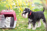 Dog and cat in carrier on gras - 180850005