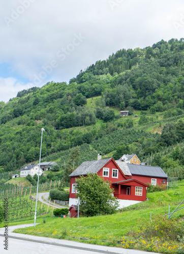 Foto op Plexiglas Khaki Hardanger Fjord, Norway
