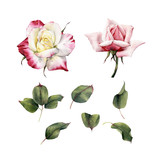 Roses and leaves, watercolor, can be used as greeting card, invitation card for wedding, birthday and other holiday and  summer background. - 180875230