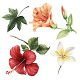 Hibiscus flowers.Watercolor, can be used as greeting card, invitation card for wedding, birthday and other holiday and summer background - 180890242