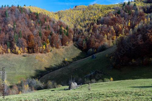 Foto op Canvas Olijf Autumn in Moeciu village, Transylvania, Romania