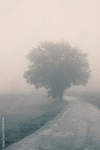 Landscape in the autumn mist, trees and road - 180894445