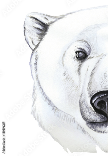 Drawing with watercolor of predator mammal polar bear, artic, portrait of polar bear, in realism style, white wool, pattern, printshop, winter, new year, christmas, on white background - 180896217