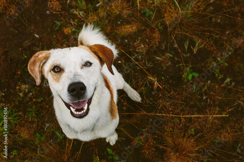 Dog standing in tranquil field