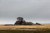 Tansania - Nationalpark Serengeti - 180905098