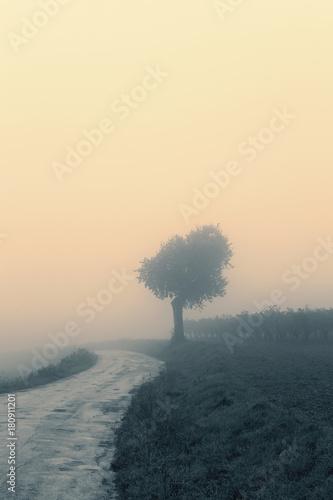 Papiers peints Beige Landscape in the autumn mist, trees and road