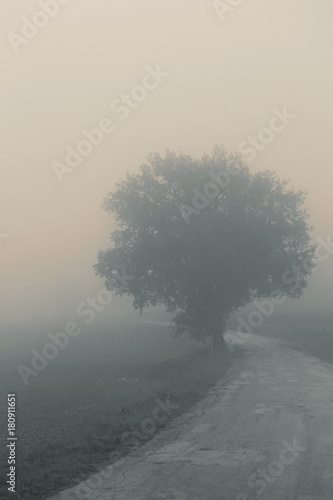 Foto op Canvas Grijs Landscape in the autumn mist, trees and road