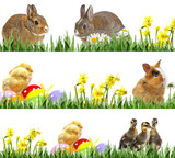 newborn chickens and easter eggs, little rabbits and easter eggs - banners - 180912676
