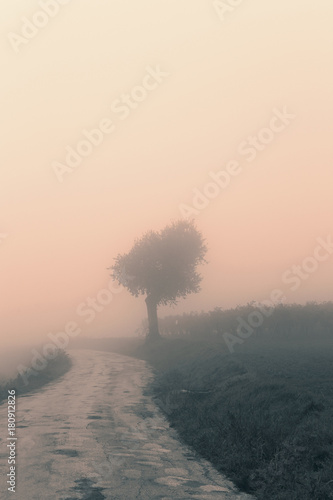 Foto op Canvas Wit Landscape in the autumn mist, trees and road