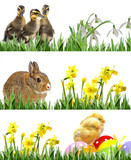 newborn chickens, rabbit and ducklings and easter eggs - banners - 180913403