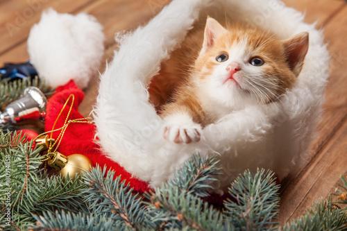Fotobehang Kat ginger kitten in santa hat against the background of a Christmas tree