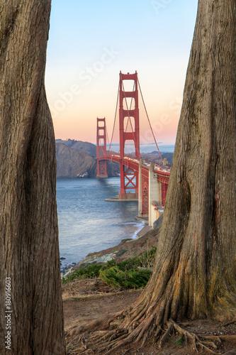 Golden Gate Bridge Through Cypress Trees. California Coastal Trail, The Presidio, San Francisco, California, USA.