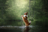 Dog border collie standing in the water - 180917293