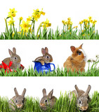 spring animals in green grass and flowers - banners - 180919073