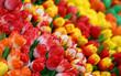 tulips on sale in the flower market in Amsterdam in the Netherla - 180921674