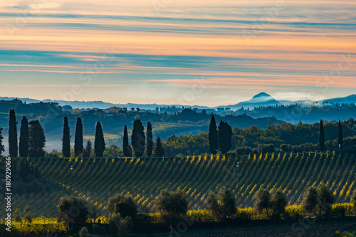 Foto op Canvas Wijngaard Tuscany landscape with vineyard, hills and mountain