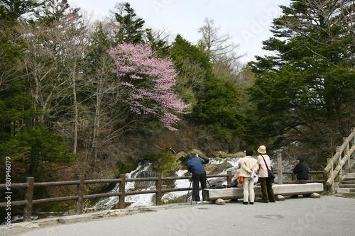 桜 お花見 撮影  Poster