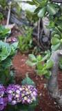hortência com plantas e terra ao fundo desfocada - 180948076