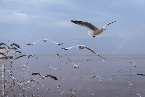 Seagulls flying over the sea and are swimming in the water Poster