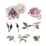 Roses, watercolor, can be used as greeting card, invitation card for wedding, birthday and other holiday and  summer background - 180967469