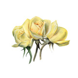Bouquet of roses, watercolor, can be used as greeting card, invitation card for wedding, birthday and other holiday and  summer background. - 180967834
